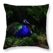 Peacock Peafowl Throw Pillow