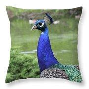 Peacock Portrait #3 Throw Pillow