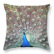 Peacock Show Throw Pillow