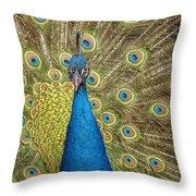 Peacock Splendor Throw Pillow