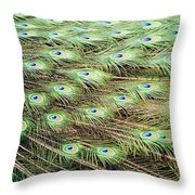 Peacock Tail Feathers  Throw Pillow