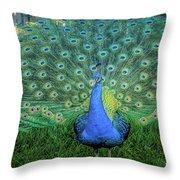 Peacock1 Throw Pillow