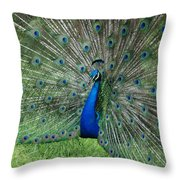 Peacocks Glory Throw Pillow