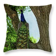 Peacock's Tail Throw Pillow