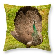 A Peahen's Plumage Throw Pillow