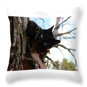 Peak-a-boo Throw Pillow