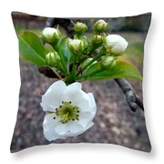 Pear Tree Blossom 3 Throw Pillow