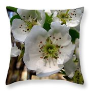 Pear Tree Blossoms 3 Throw Pillow