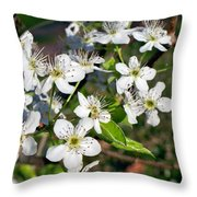 Pear Tree Blossoms Iv Throw Pillow