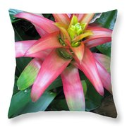 Peek-a-boo Beauty  Throw Pillow