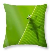 Peek A Boo Gecko Throw Pillow