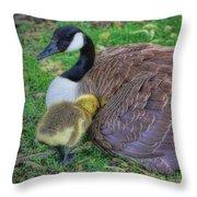 Peek-a-boo Goslings Throw Pillow