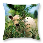 Peek A Boo Throw Pillow by Jan Amiss Photography