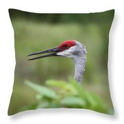 Peek-a-boo Sandhill Crane Throw Pillow