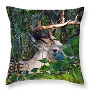 Peeking Through The Trees Throw Pillow