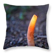 Peeping Red Eyed Fly Throw Pillow