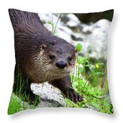 Peering Otter Throw Pillow