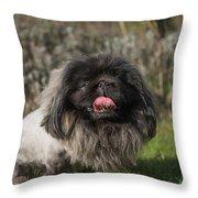 Pekingese Dog Throw Pillow