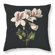 Pelargonium Album Bicolor, M De Gijselaar 1830 Throw Pillow