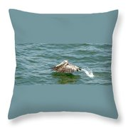 Pelecan In Flight Throw Pillow
