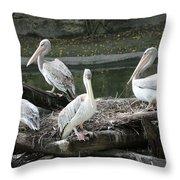 Pelican Grouping Throw Pillow