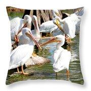 Pelican Squabble Throw Pillow