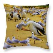 Pelicans At Pearl Beach 3.1 Throw Pillow