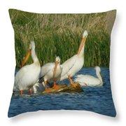 Pelicans Being Pelicans Throw Pillow
