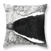 Penguin From Above Throw Pillow