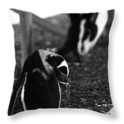 Penguins Under The Boardwalk Throw Pillow