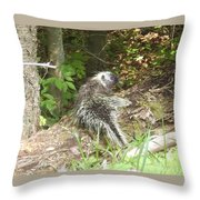 Pennsylvania Porcupine Throw Pillow