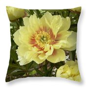 Peony Paeonia Sp Bartzella Variety Throw Pillow