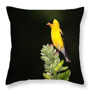 Perched American Goldfinch Throw Pillow