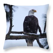 Perched And Proud  Throw Pillow