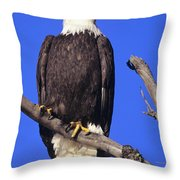 Perched Bald Eagle Throw Pillow