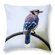 Perched Blue Jay Throw Pillow