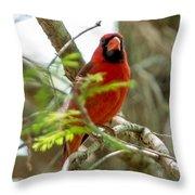 Perched Cardinal Throw Pillow