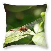 Perched Dragonfly Throw Pillow