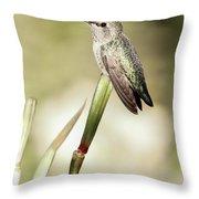 Perched Hummingbird On Flower Throw Pillow