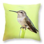 Perched Hummingbird Vi Throw Pillow