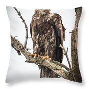 Perched Juvenile Eagle Throw Pillow