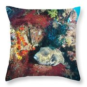Perched Out Puffer Throw Pillow