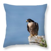Perched Peregrine Falcon Throw Pillow