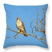 Perched Poser Throw Pillow