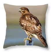Perched Red Tail Hawk Throw Pillow
