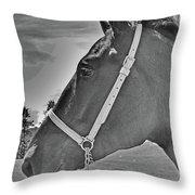 Percheron Profile Throw Pillow