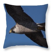Peregrine 1 Throw Pillow