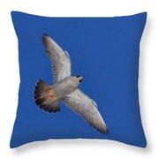 Peregrine Falcon I Throw Pillow