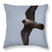 Peregrine Falcon IIi Throw Pillow