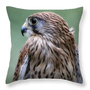 European Kestrel Throw Pillow